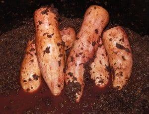 brovada, marinated turnips