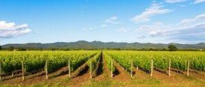 maremma-wine-region