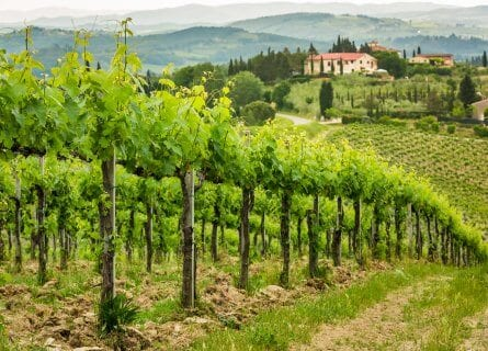 Montalcino Vineyards