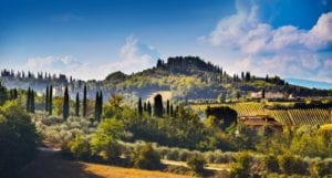 tuscany - tuscany-cypress-and-vineyards