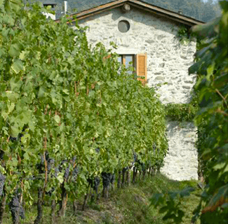 Nino Negri Winery