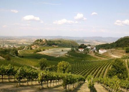 Colli Euganei Vineyards