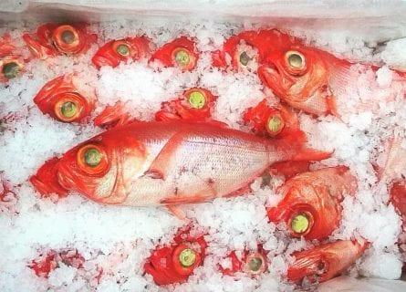 Fresh Azorean fish