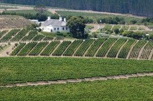 Hemel-en-Aarde Wine Region