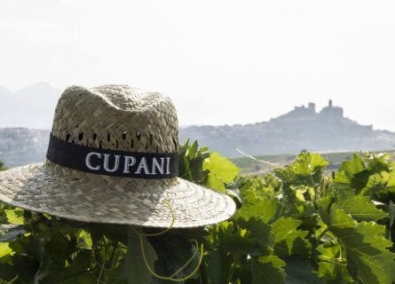 Cupani, family wine estate