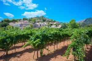 mallorca - mallorca-vineyards