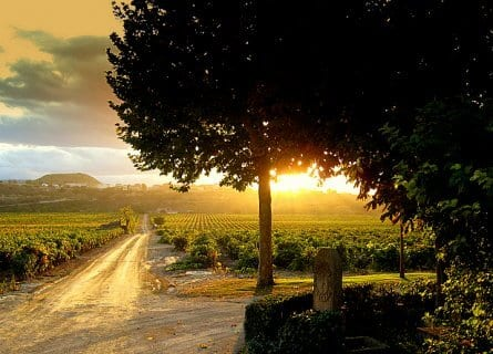 Contino Wine estate
