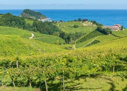 Txakoli Vineyards overlooking the Sea