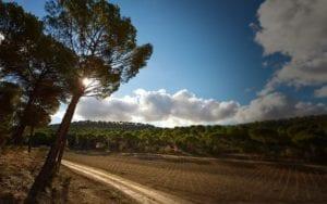 ribera-del-duero - vega-sicilia-vineyards
