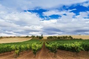 ribera-del-duero - vineyards-of-ribera-del-duero