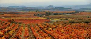 rioja-alavesa - rioja-alavesa-wine-region
