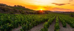 rioja-oriental - rioja-oriental-wine-region