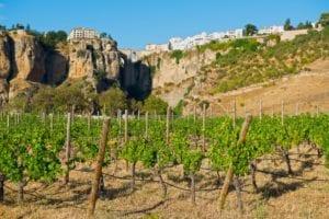 ronda - sierras-de-ronda-vineyards