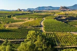Rioja wine country