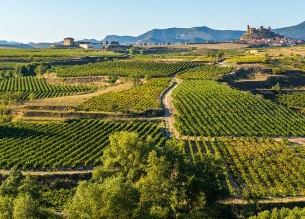 Rioja wine country