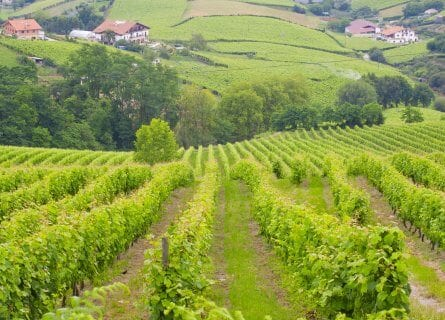 Txakoli vineyards near Getaria