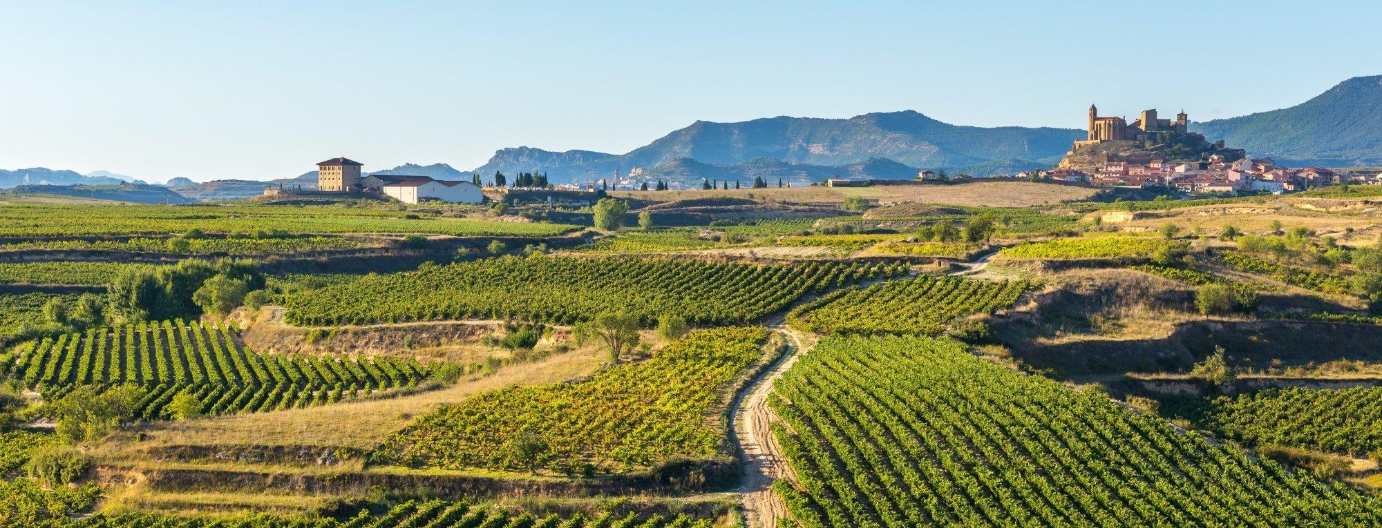 Why consider vineyards for sale in Spain? - Eurobrix Blog